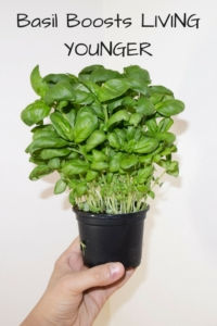Basil Boosts Living Younger