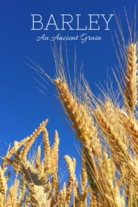 Barley is Truly an Ancient Grain
